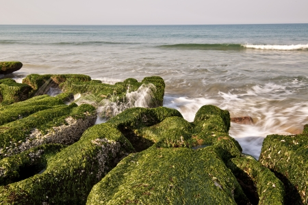 algal: Stone trench of Taiwan coast