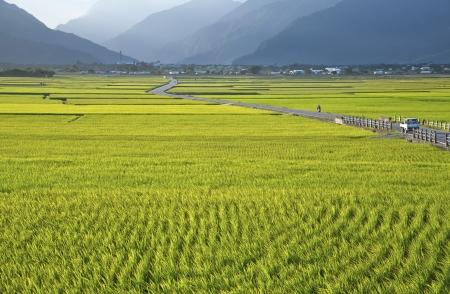 Taiwan s rural scenery