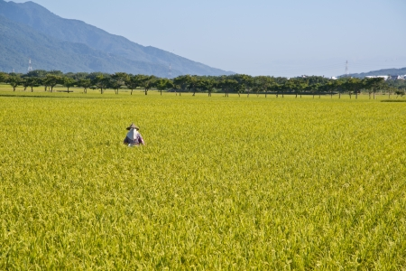township: Pastoral scene in Eastern Taiwan Stock Photo