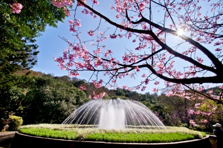 Cherry and fountains in Taiwan 写真素材