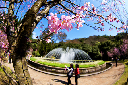 Cherry and fountains in Taiwan