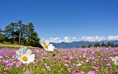 대만의 아름다운 꽃밭 스톡 콘텐츠