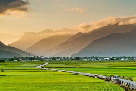 La vista horizontal de los campos de arroz en Chishang, Taitung, Taiwán. Foto de archivo