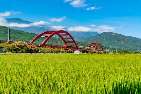 Paddy field and forest scenery at Yuli in Hualien, Taiwan.