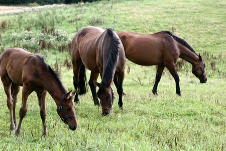 horses on a field in the summer  Stock Photo - 9408943
