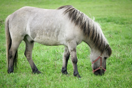 danish horses on a field in the summer Stock Photo - 9409477