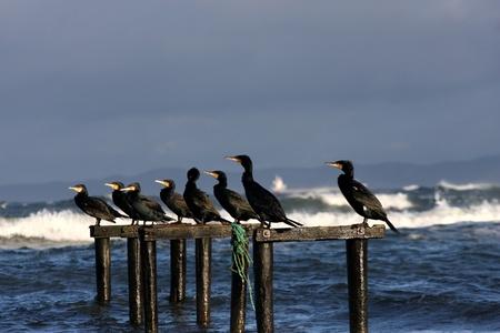 seabirds: birds and sea