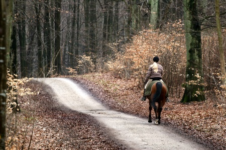 free riding: Ridding horses on in a forest  in denmark Stock Photo