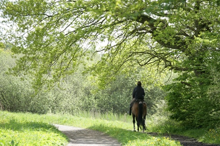 scandinavian people: Ridding horses on in a forest  in denmark Stock Photo