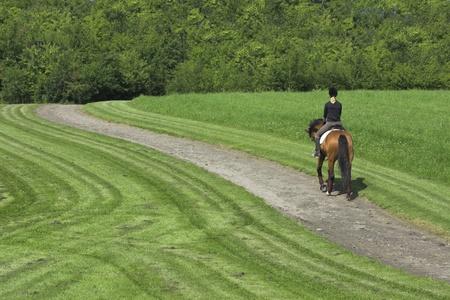 Débarrasser des chevaux sur dans une forêt du Danemark