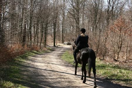 free riding: Liberare i cavalli su in una foresta in Danimarca