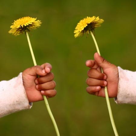 child hand holding a dandelion  photo