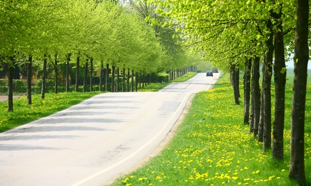 green spring landscape with green  trees in the danish country side photo