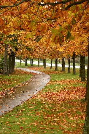 デンマークの田園地帯の秋