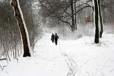 wintersport: people on ski   in snowy landsacpe