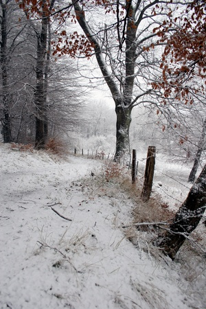 Nature in winter under snow in denmark