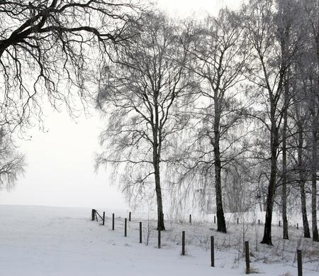 paisajes: Naturaleza en invierno bajo la nieve en Dinamarca