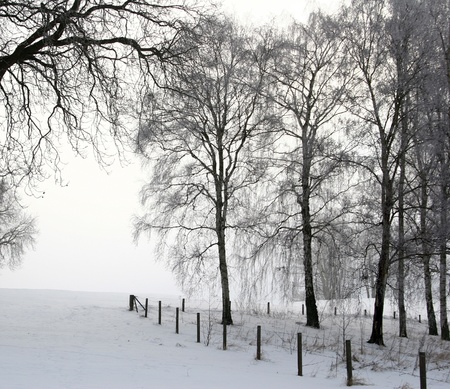 Nature in winter under snow in denmark
