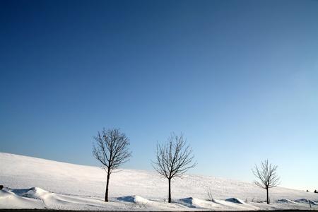 landscape   in  winter Banque d'images