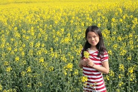 summer in the countryside  in denmark rapse field photo