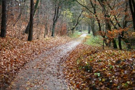 treetrunk: colorul forest in autumn in denmark