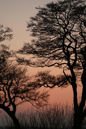 Soleil derrière une branche d'arbre Banque d'images