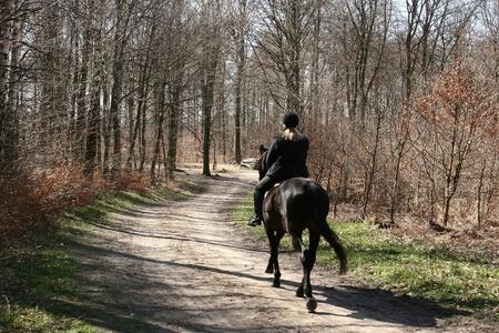 fille chevauchant un cheval danois dans la forêt de l'été