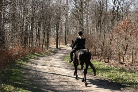 horse riding: girl riding a danish horses in the forest in the summer