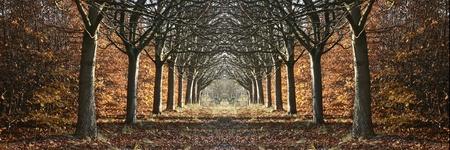 デンマークの木の配向の田舎の秋
