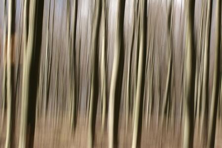 panning shot: foresta, closeup su pino alberi tronchi girato con panoramica tecnica