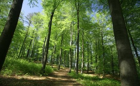 paysage Vert printemps avec des arbres verts dans le côté danois pays