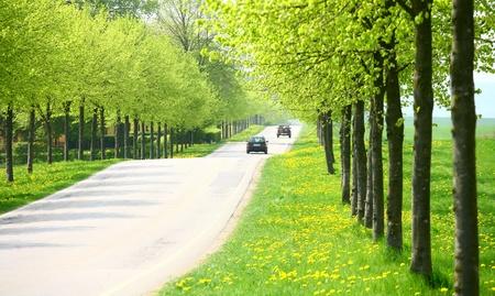 デンマーク国側で緑の木々 と緑の春の風景をクローズ アップの古いコレクションのビンテージ車都市の交通標識クローズ アップの古いコレクショ