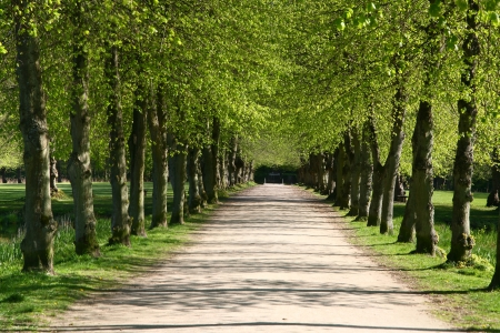 forest path: green path in a forest Stock Photo