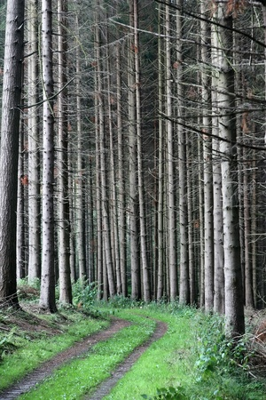 forest , trees and leaves photo