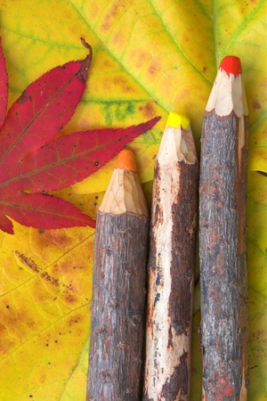 Rudimentary wood pencils on colorful autumn leaves. Back to school (in general in autumn)  photo