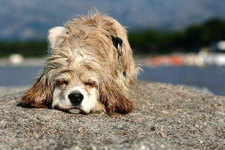 abandonned dog on a beach in calvi france Stock Photo