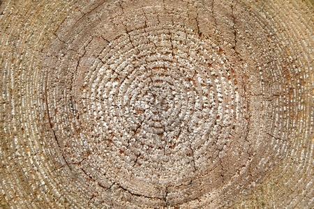 trunk  tree: Madera c�rculos tronco detalles