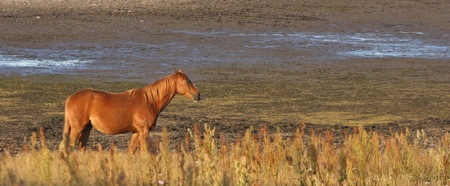 terrestrial mammals: Nature in south Sweden in the province of Sk�ne, horses on a field
