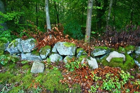 ne: Nature in south Sweden in the province of Sk�ne Stock Photo