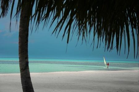 treetrunk: Sceneries from the maldivian islands
