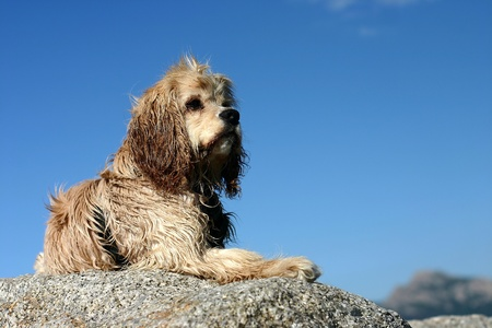 abandonned dog on a beach in calvi france photo