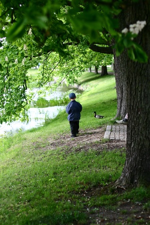 alignement: green spring landscape with green grass bench and trees a a boy with ducks