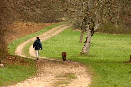 autumn in the countryside  in alsace france a girl with her dog walking in the countryside  photo