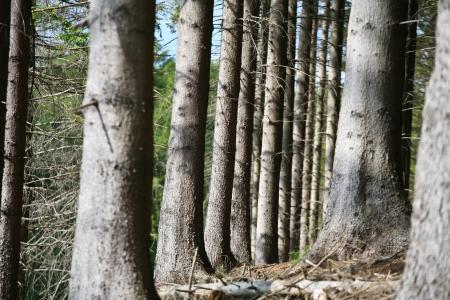 Des paysages forestiers au Danemark en été Banque d'images