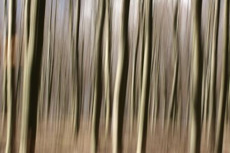 panning shot: foresta, primo piano sul pini tronchi girato con panoramica tecnica Archivio Fotografico