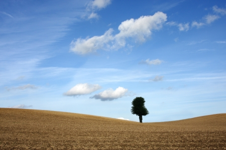 desertification: Tree in the desert under  summer sky with nice cloud formation