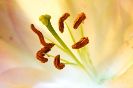 orchidaceae: Orchidaceae close up and details Stock Photo