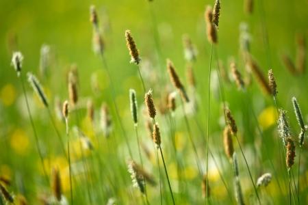 gramineous: Grass detail