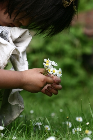 gladden: close up of  child  hand picking up a a  daisy flower in the grass Stock Photo