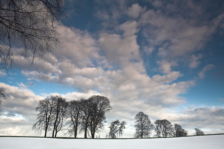 scandinavian landscape: Winter sceneries in Denmark with a field covered by snow in the sun